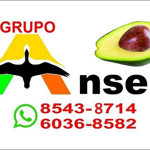 Grupo Anser S.A